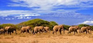 Kenia - informacje ogolne